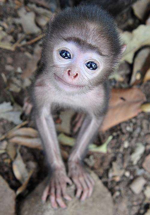 20 CUTEST Baby Monkeys