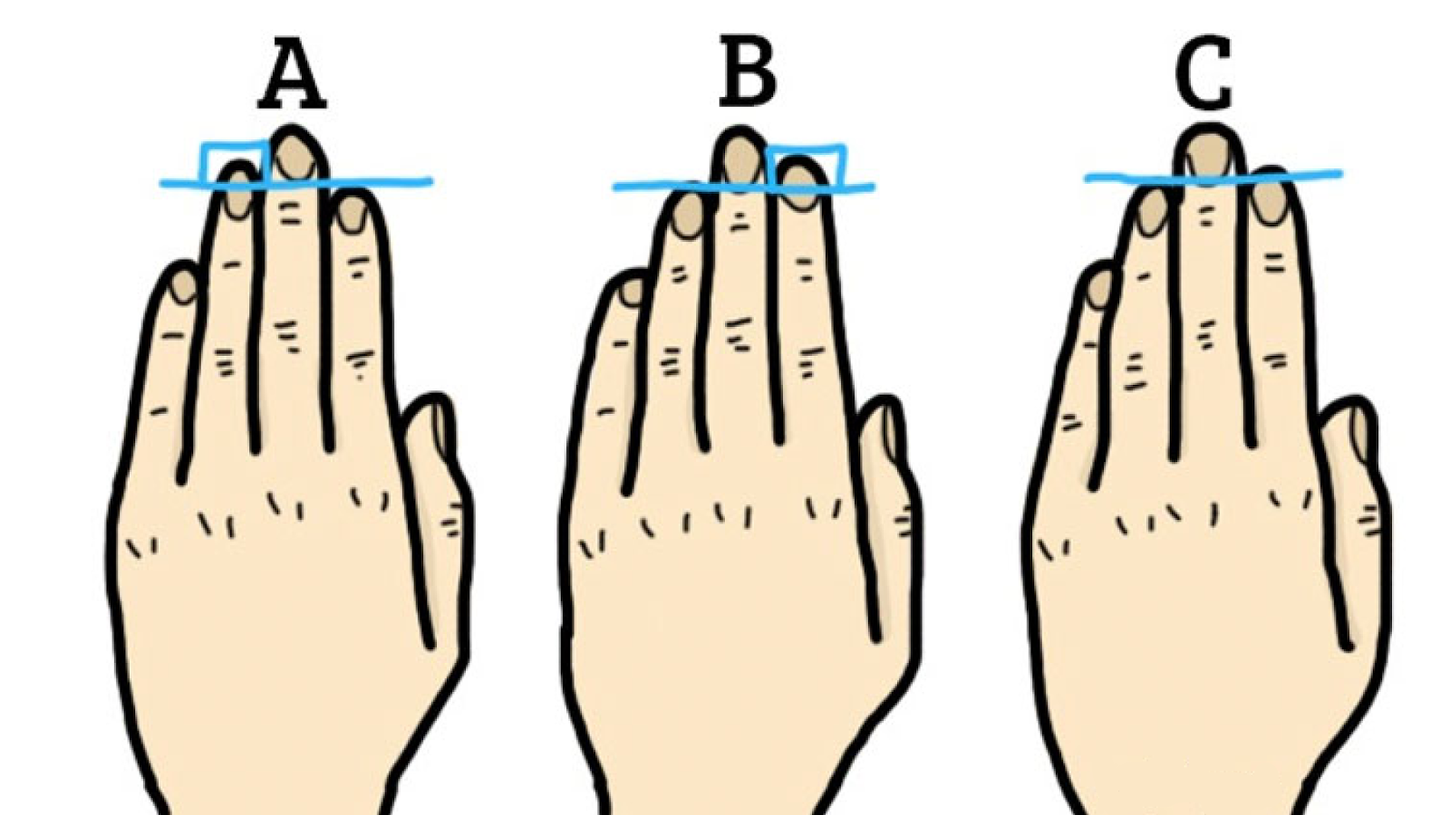 Finger length and the casanova pattern