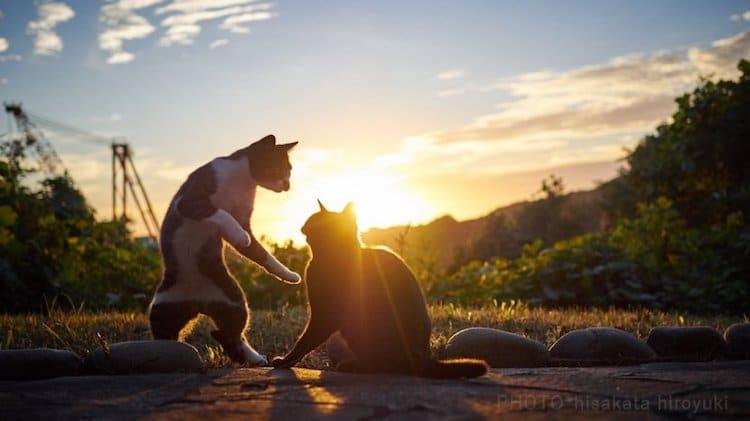 Pet Photography by Hisakata Hiroyuki