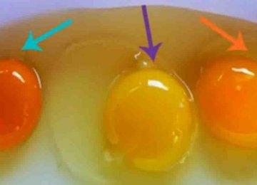 תאמינו או לא אבל רובכם אוכלים ביצים מתרנגולות חולות – כך תגלו איזו ביצה בריאה