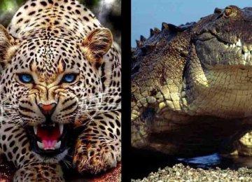 20 החיות הכי קטלניות לבני אדם – לא תאמינו מי במקום הראשון
