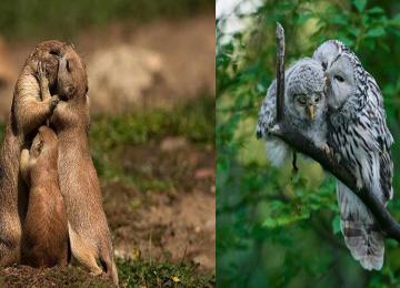 19 בעלי חיים מאוהבים שישברו לכם את הלב!