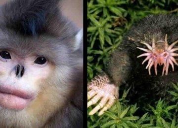 מדהים – 22 בעלי חיים יוצאי דופן שבחיים לא שמעתם שהם קיימים