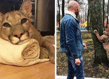 הזוג הזה לקחו פומה מגן חיות והפכו אותו לחתול בית מפונק