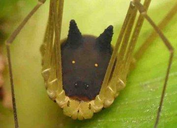 מתוק – התגלה יצור חדש וחמוד ביערות הגשם שנראה כמו ראש כלב מצויר (אין כניסה לארכנופובים)
