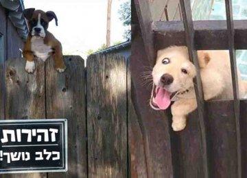 """14 שלטים של """"זהירות כלב נושך"""" שנכשלו כי הכלבים האלה זה הדבר הכי חמוד שיצא לכם לראות"""