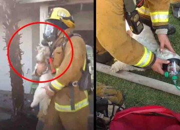מרגש – הכבאים הללו הצילו את הכלב הזה מבית בוער לאחר ששאף המון עשן