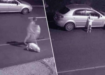 מצמרר ועצוב – הכלב הזה לא הבין כי הבעלים שלו זרק אותו לרחוב והוא מנסה בייאוש לחזור למכונית