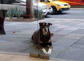 הכלב החמוד הזה כל כך התחנן לפיצה וכמעט קיבל אותה אלמלא מה שהיה כתוב על הקולר שלו