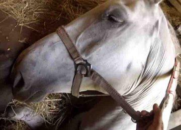 מדהים – הם עשו הכל בכדי להציל את הסוסה הזו שנפלה לתוך בור
