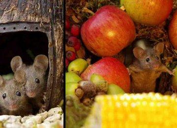 הבחור הזה גילה בגינתו מספר עכברים והחליט שלא להיפטר מהם אלא לבנות להם כפר עכברים והתוצאה – פשוט מדהים!
