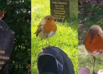 מרגש – האימא הזו באה לבקר את קבר בנה כשלפתע ציפור שיר הגיעה לנחם אותה