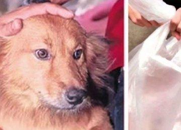 הכלב חזר לבית עם שקית בפה – מה שהיה בפנים הדהים את כל העולם
