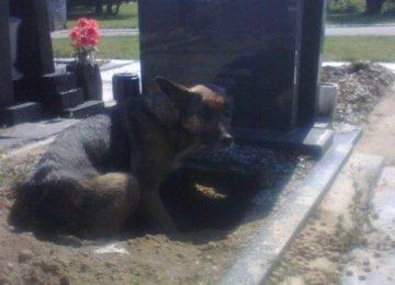 כולם חשבו שהיא רק רוצה להיות קרובה אל קבר הבעלים שלה, אך אחרי שהביטו על זה מקרוב הם גילו…