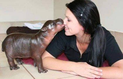בעלי חיים שנתפסו בעדשה בשבוע הראשון לחייהם