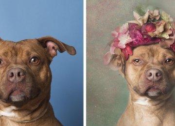 גלו את הצד המתוק של כלבי פיטבול בפרויקט צילום פרחוני במיוחד!