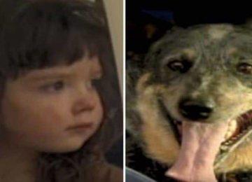 הילדה בת ה-3 נעלמה ביער – 15 שעות מאוחר יותר המשטרה ראתה את מה שעשה הכלב ומהירה אליו