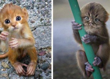 19 התמונות החמודות ביותר של גורי קופים בכל הזמנים