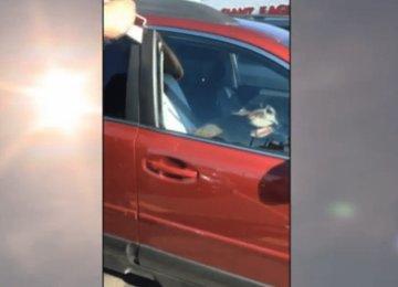 בעודם מנסים לחלץ את הכלב מהמכונית הלוהטת, הבעלים הופיע ואמר את זה…