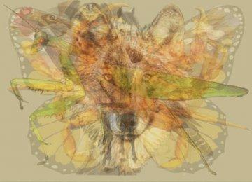 מדהים: מהי החיה הראשונה שאתם מצליחים לזהות בתמונה? לא תאמינו מה זה אומר על האישיות שלכם