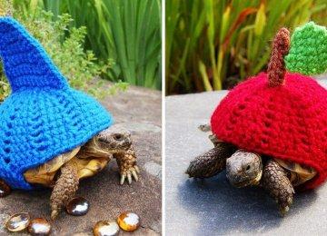 היא מלבישה צבים בבגדי צמר מיוחדים ומהרווחים שעושה היא תורמת