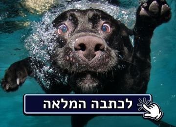 15 עובדות מפתיעות על כלבים שכנראה לא ידעתם!