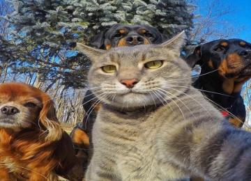 20 בעלי חיים שיקחו אתכם בסיבוב כשזה נוגע לסלפי