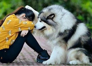 26 סיבות אשר מראות למה כלבים הם הדבר הכי טוב שקיים בעולם הזה!