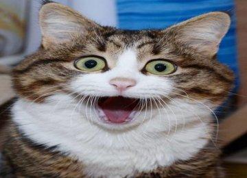 החתול הזה משתלט על האינטרנט עם הבעות פנים ממש מצחיקות , למרות הבעיה שלו!