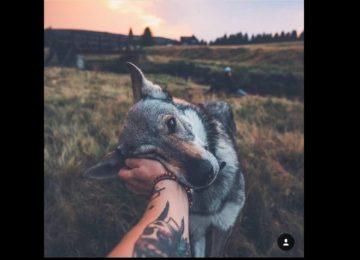 10+ תמונות כלבים שנראים כאילו נלקחו מתוך עולם החלומות