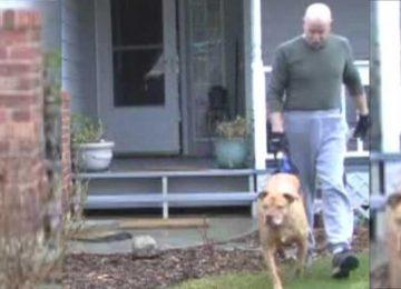 זה נראה כמו טיול רגיל עם הכלב, אך הביטו שוב – זה הקשר הכי חזק שראינו בין כלב לבעלים שלו