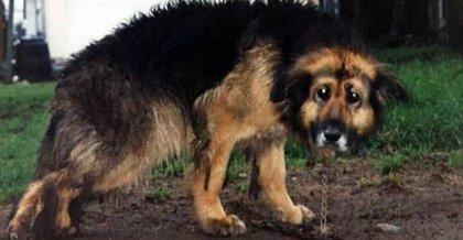 כלבה חולה היתה כבולה על ידי הבעלים במשך 10 שנים – סוף סוף הגיעה ההצלה