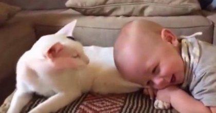 התינוק מושך את רגליו האחוריות של החתול, מה שאמא תופסת בסרטון מתפשט עכשיו כמו אש בשדה קוצים באינטרנט