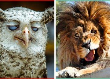 16 בעלי חיים שצולמו בתזמון המושלם