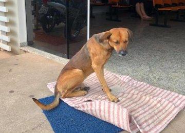 הכלב עמד במשך 4 חודשים מול דלת הכניסה לבית חולים – הסיבה תמיס לכם את הלב