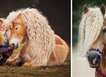 סוסים יפהפיים עוצרי נשימה שאנחנו לא יכולים להפסיק להביט בהם