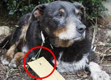 הם היו בטוחים שהכלב שלהם הלך לאיבוד – אך לפתע הוא הופיע בכניסה לבית עם פתק על צווארו