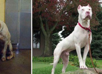 תמונות לפני ואחרי של כלבים שעברו אימוץ שימיסו לכם את הלב – זאת ההוכחה שאהבה יכולה לשנות הכל