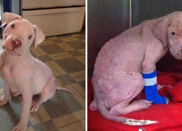 הכלבלב שסבל מהזנחה חמורה קיבל בית חדש – תראו את התגובה שלו כשהוא הסתובב והבין מי אימץ אותו