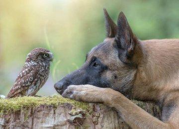 היום גיליתי ידידות מופלאה בין כלב לשכניו הינשופים